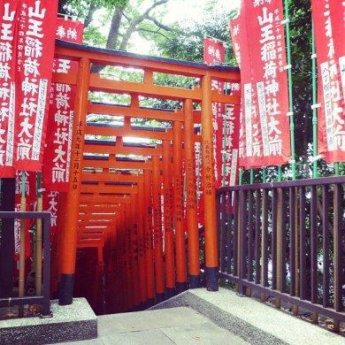 日枝神社の入り口に鳥居がたくさんありますね(*_*) So many torii at the entrance of Hie-jinja!