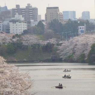 Sakura blossoms at Sotobori-dôri