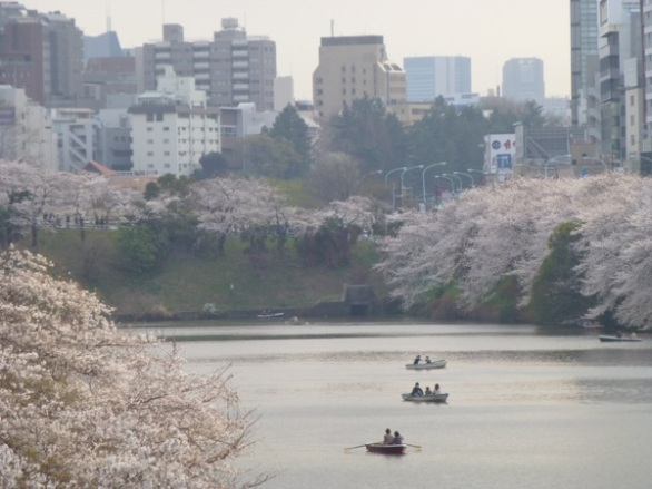 Sakura blossoms at Sotobori-dôri