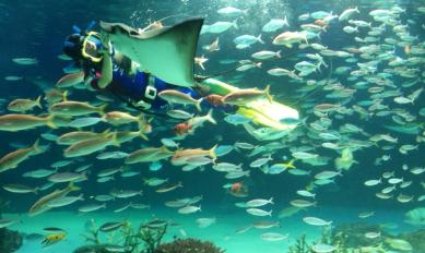 2013-08-japon-sunshine-aquarium-1