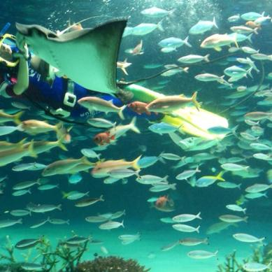 2013-08-japon-sunshine-aquarium-1