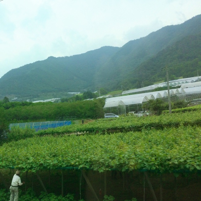 山梨に着きながら、たくさん緑を見えます♪ Arriving at Yamanashi: plenty of greenery and green hills♪ - at 甲府駅 (Kōfu Sta.)