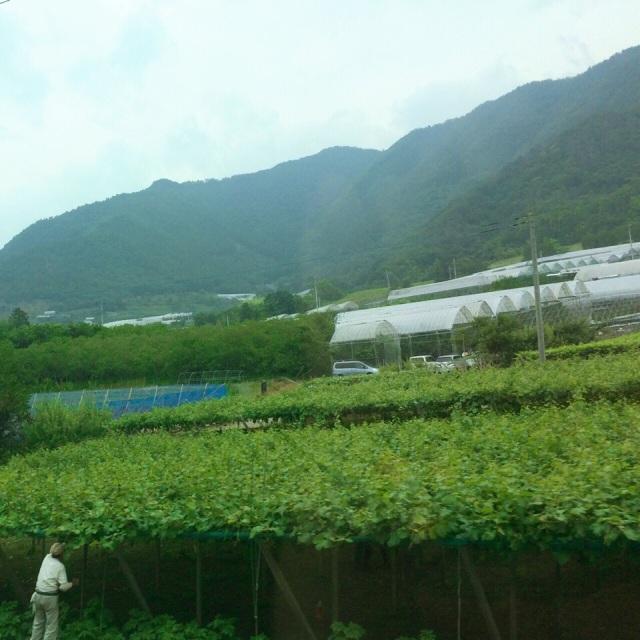 山梨に着きながら、たくさん緑を見えます♪ Arriving at Yamanashi: plenty of greenery and green hills♪ - at 甲府駅 (Kōfu Sta.)