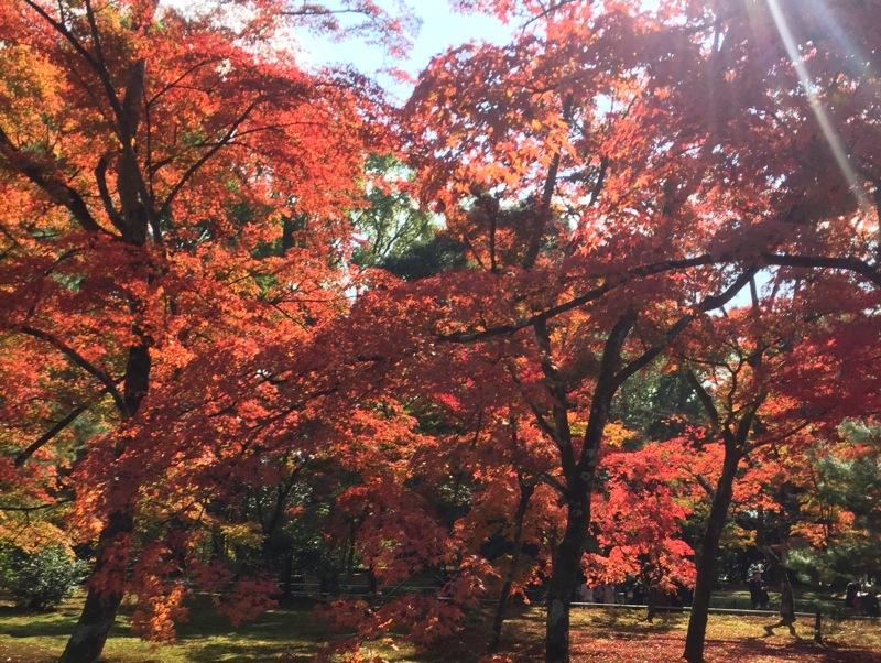 京都の紅葉の始まり