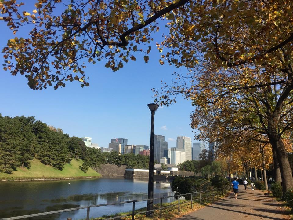 私の定期的なジョギングコースでも紅葉が始まります。 My regular jogging course in Tôkyô is also getting its autumn colors — at 桜田門 / Sakurada-mon Gate.