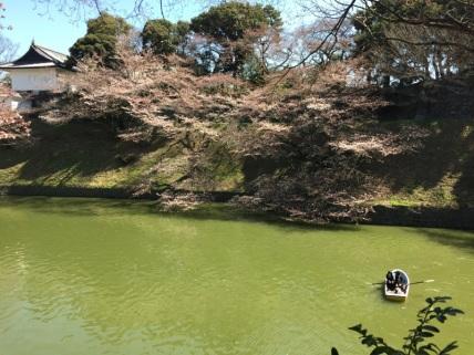 sakura-hanami-2015-chidorigafuchi-1