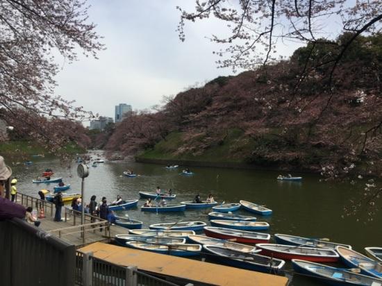 sakura-hanami-2015-chidorigafuchi-boat-1