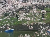 sakura-hanami-2015-chidorigafuchi-boat--1