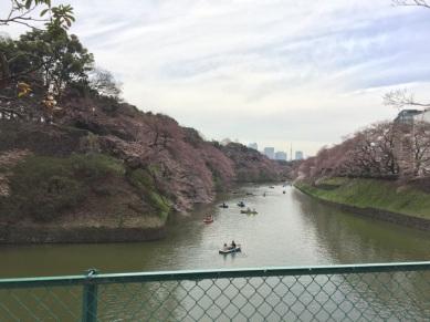 sakura-hanami-2015-chidorigafuchi-boat--2