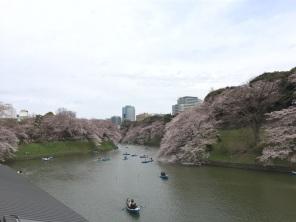 sakura-hanami-2015-chidorigafuchi-boat--3