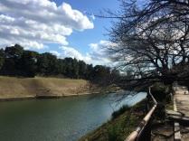 sakura-hanami-2015-chidorigafuchi-february-1
