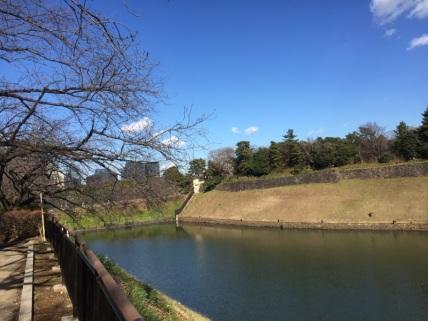 sakura-hanami-2015-chidorigafuchi-february-3
