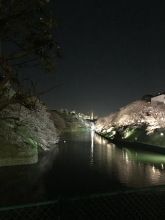 sakura-hanami-2015-chidorigafuchi-night-1