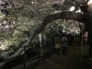 sakura-hanami-2015-chidorigafuchi-night-2