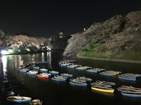 sakura-hanami-2015-chidorigafuchi-night-3