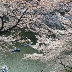 sakura-hanami-2015-chidorigafuchi-view-1