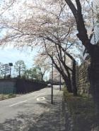 sakura-hanami-2015-diet-library-1