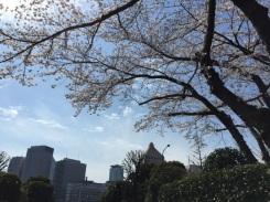 sakura-hanami-2015-diet-library-2