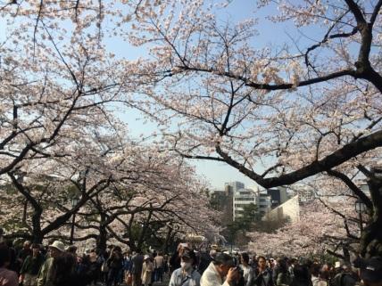 sakura-hanami-2015-kitanomaru-2