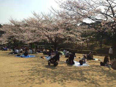 sakura-hanami-2015-kitanomaru--3