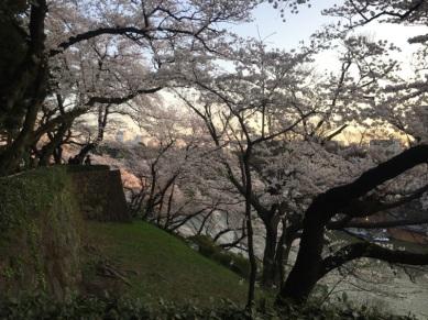 sakura-hanami-2015-kitanomaru---3