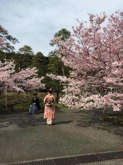 sakura-hanami-2015-national-theater--2