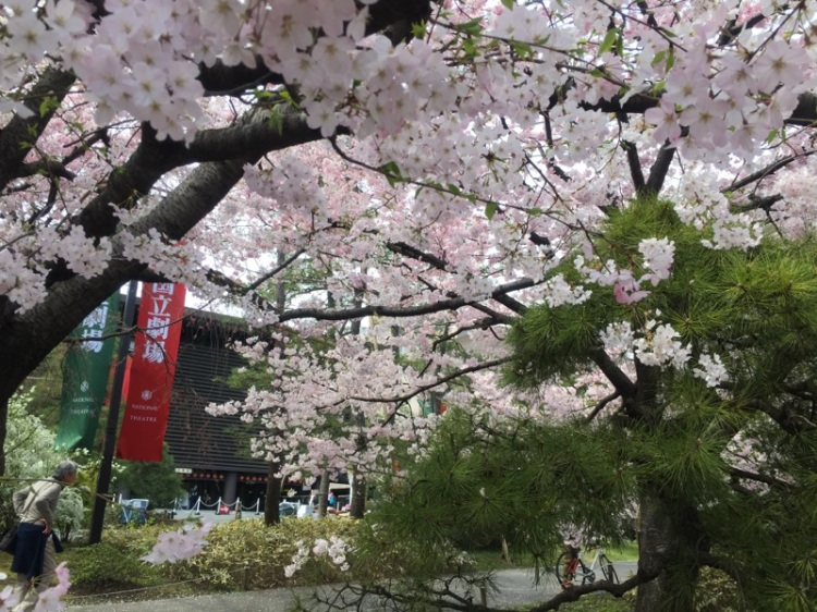 sakura-hanami-2015-national-theater-5