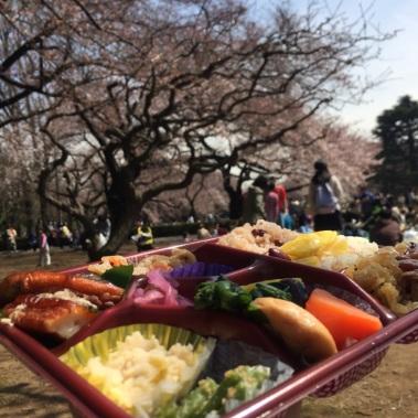 sakura-hanami-2015-shinjuku-gyoen--2