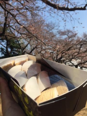 sakura-hanami-2015-shinjuku-gyoen--3