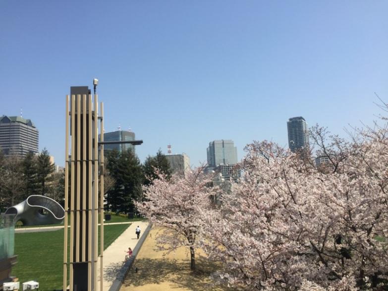 sakura-hanami-2015-tokyo-midtown-1