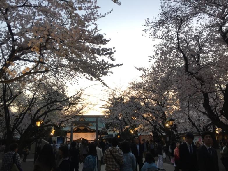 sakura-hanami-2015-yasukuni-1