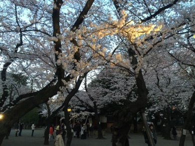 sakura-hanami-2015-yasukuni-2