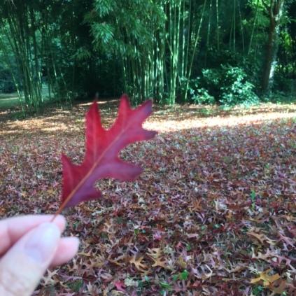 france-nantes-gaudiniere-platane-feuilles-rouges-4