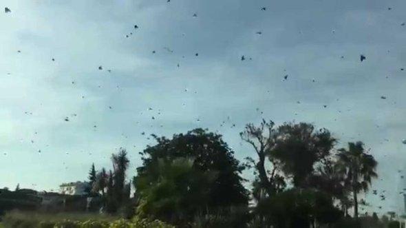 oiseaux-migrateurs-nice