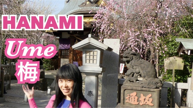 hanami-ume-matsuri-ushi-tenjin-iidabashi-tokyo