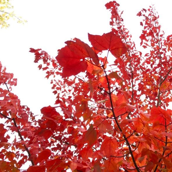 2016-10-feuilles-rouges